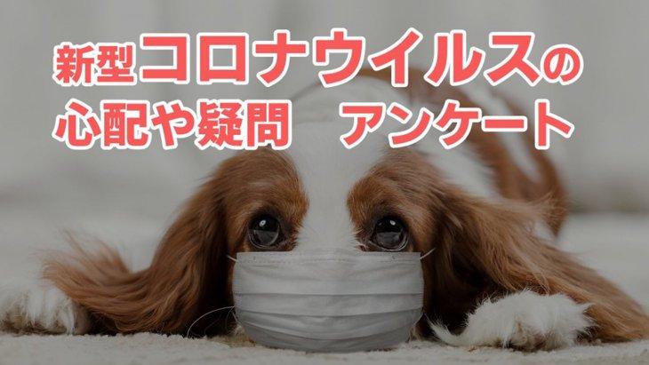 【アンケート】新型コロナウイルスに関する心配や疑問