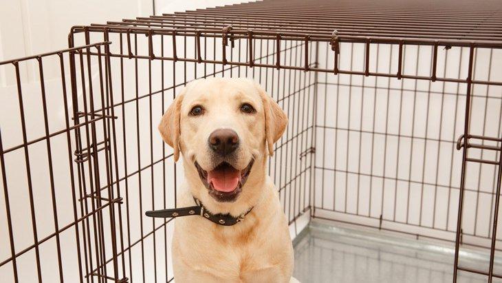 犬のケージが持つ3つの役割!意外な効果や使うときのコツを解説