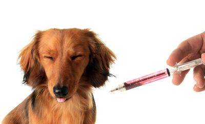 危険!犬の注射器を再利用する獣医について