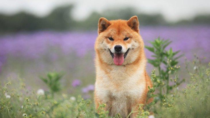 愛犬を『かっこいい』と感じる瞬間4選