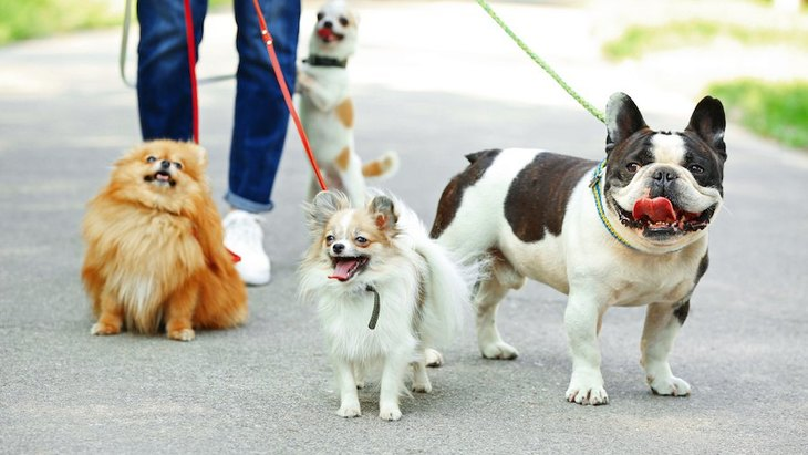 犬の散歩中にリードが外れてしまった!絶対NG行為と適切な対処法