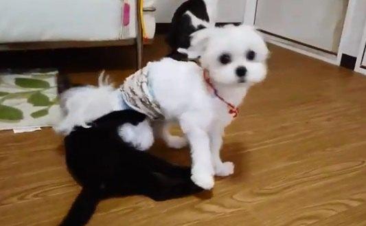 「今日こそ白(犬)黒(猫)付けようぜ…。」熱い戦いが始まる?