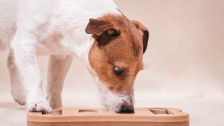 【大流行中!】犬のための「知育玩具」の役割や効果は?