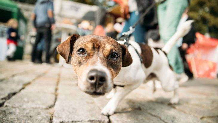 犬が散歩中にリードを引っ張る!なおすべき?起こりうるトラブルや対処法について
