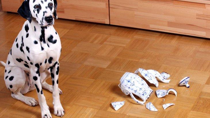 愛犬に対してイライラする人は要注意!考えられるデメリット5選