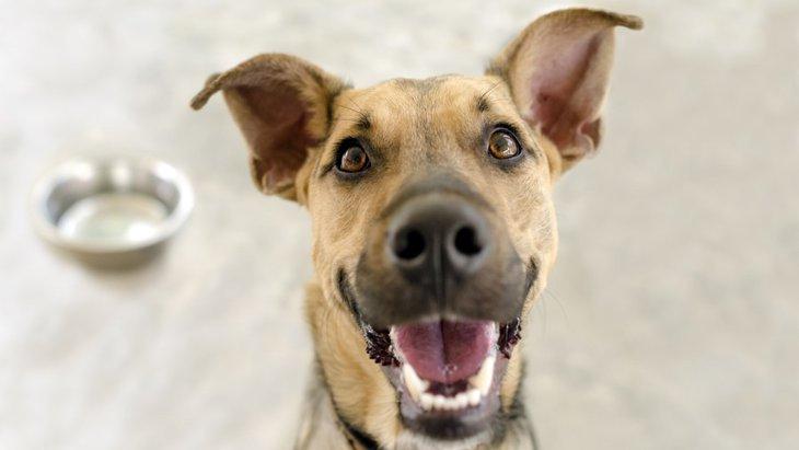 犬がご飯を散らかしながら食べる6つの理由と対処法