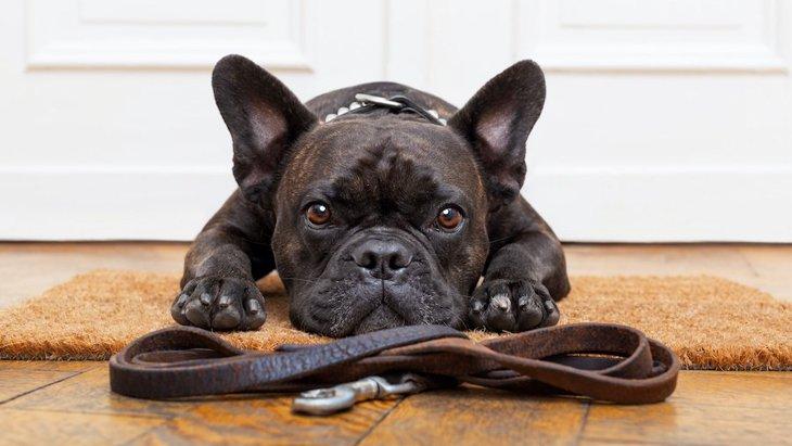 犬が散歩前に大暴れしてしまう時の対処法2選