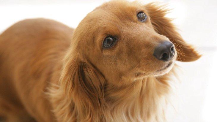 犬の『椎間板ヘルニア』の原因3選!こんな症状が出たら要注意!