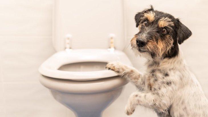 ウンチは健康のバロメーター!愛犬の毎日のトイレで体調をチェック!