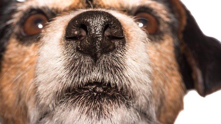 犬が鼻先をつけてくるときの心理