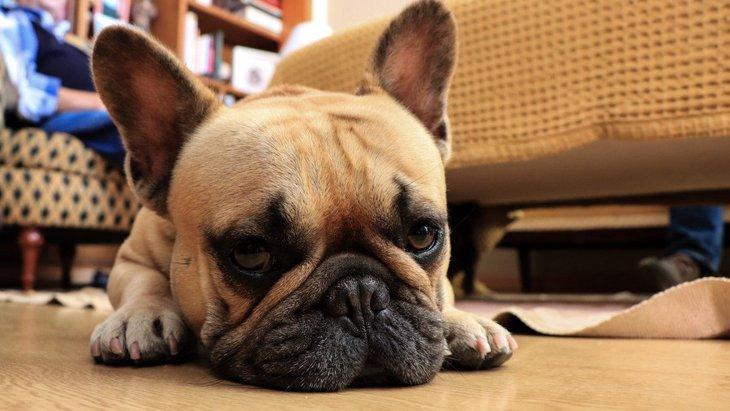 おとなしい子が多い犬種5選♡あなたの愛犬は入ってる?