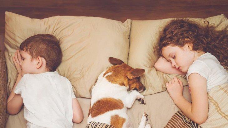 愛犬と出会えて良かったと感じる瞬間3選
