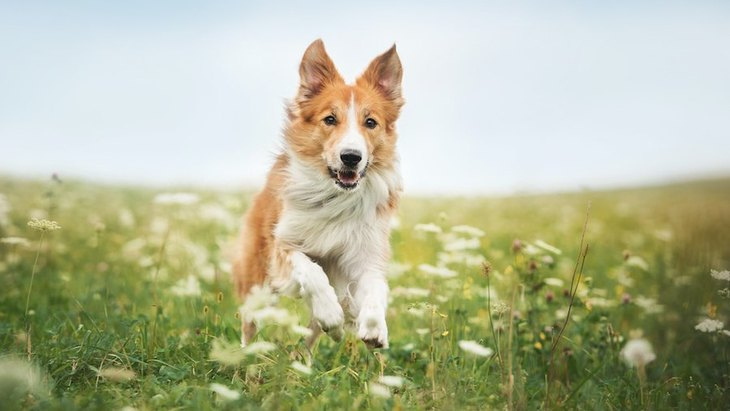 犬への『理想の押し付け』は虐待に!愛犬の気持ちを考えた育て方とは