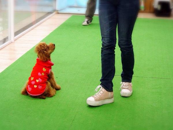 犬のしつけ教室で正しいトレーニング方法を身につけよう