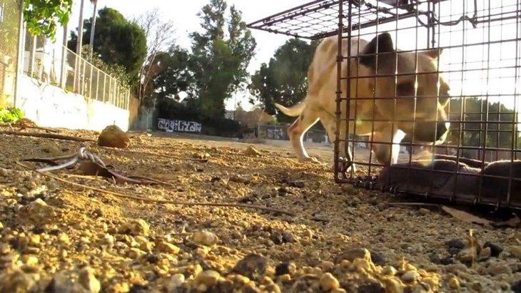 この大変化は驚き!咬む犬は「悪い犬」ではないと教えてくれる動画