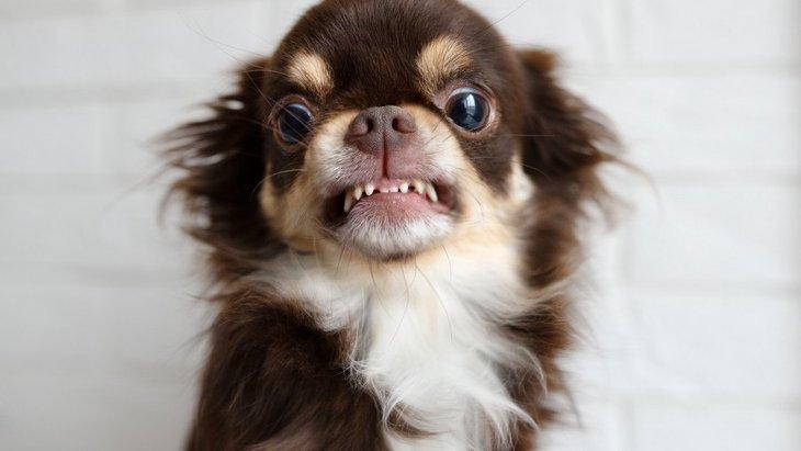犬が飼い主を愛していない時にする仕草や行動5選