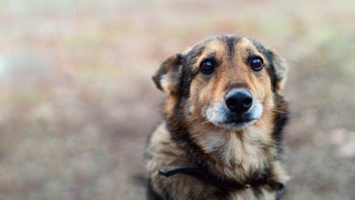 犬とスキンシップを取らないと起こる4つの危険なこと