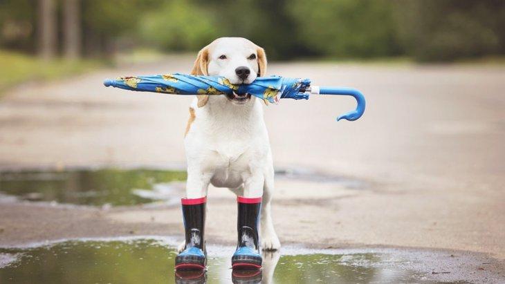 犬に靴を履かせる必要性とおすすめの商品5選