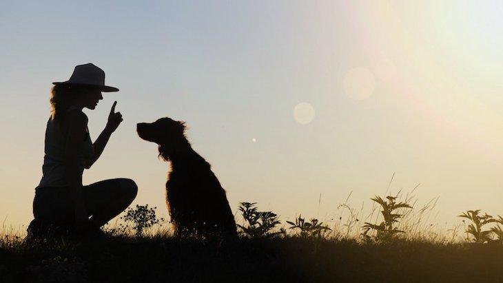 犬のトレーニングは不自然でかわいそう?そう思う前にご一読ください