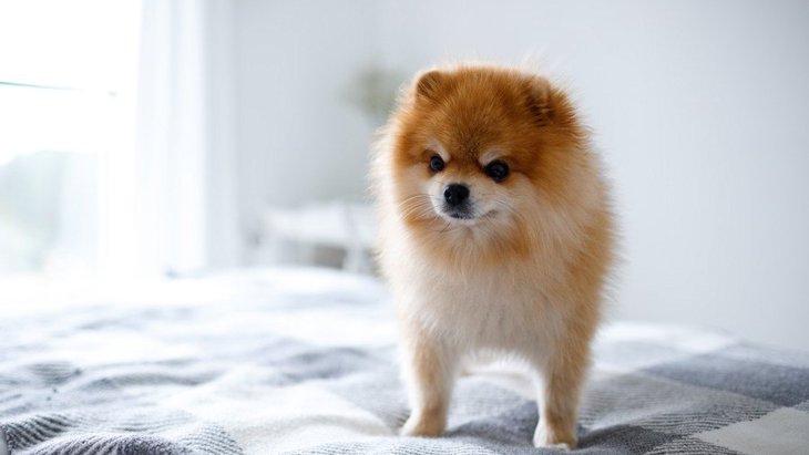 犬が飼い主に『文句』を言っている時の仕草4選