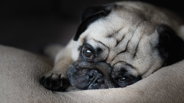 なんだか元気ない…。愛犬のテンションが低い理由と対処法