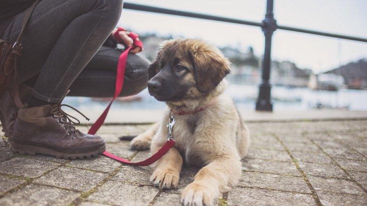 犬の散歩は本当に必要なのか?重要性と行かないリスクについて