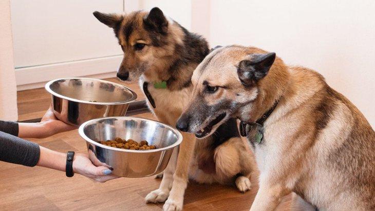 【あるある】犬の多頭飼いをした人にしかわからない『5つの大変なこと』
