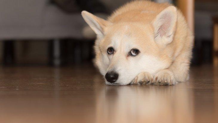 犬が「やる気がないとき」に見せる仕草とは?