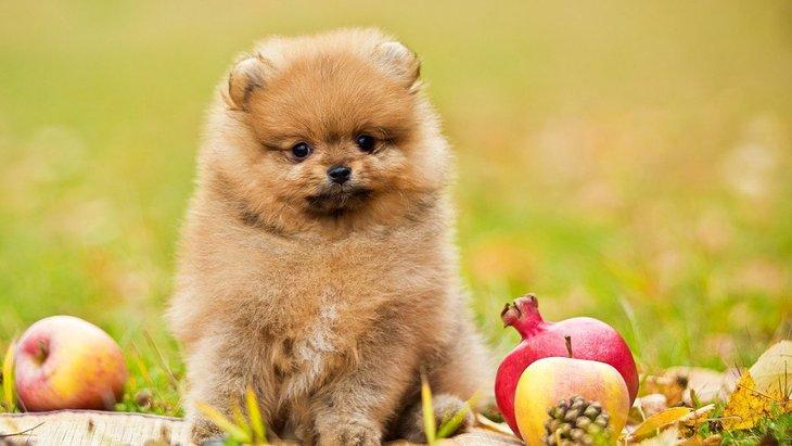 犬も食べられる秋の野菜6選