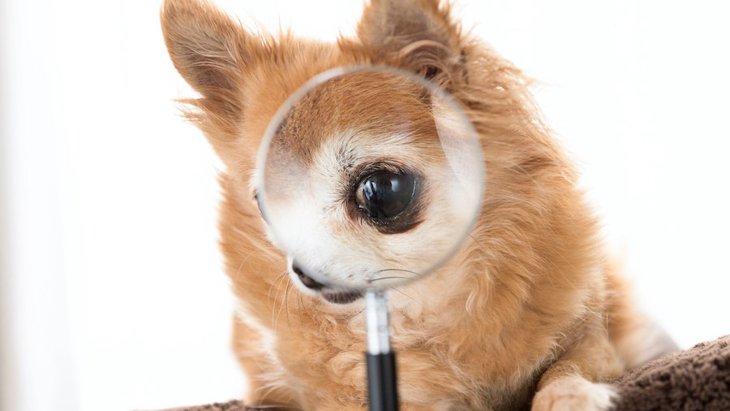 愛犬にはどう見えている?犬の視覚機能と世界の見え方について
