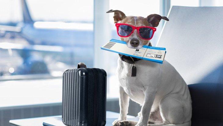 犬を飼っている人は長期旅行に行けるのか?