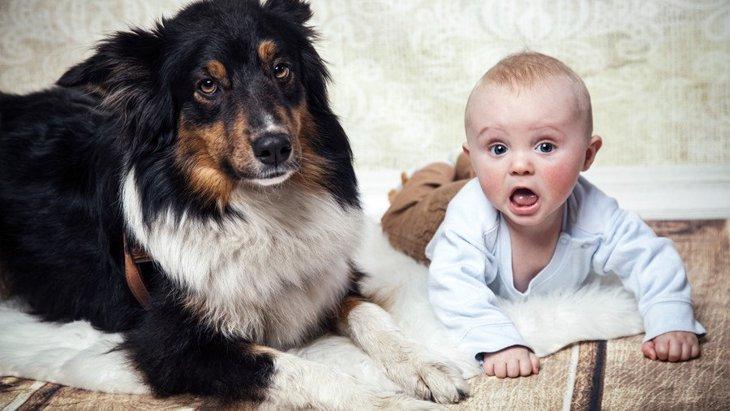 子供のいる家庭で犬を飼うときに考えたいこと3つ