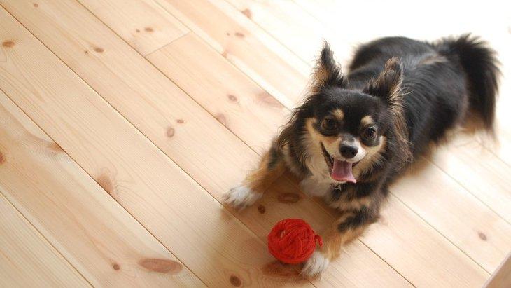 犬がどうしても構ってほしいときにする行動3選