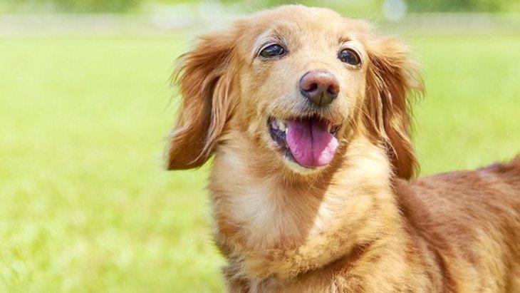 【あるある】小型犬の飼い主がよく経験する5つのこと