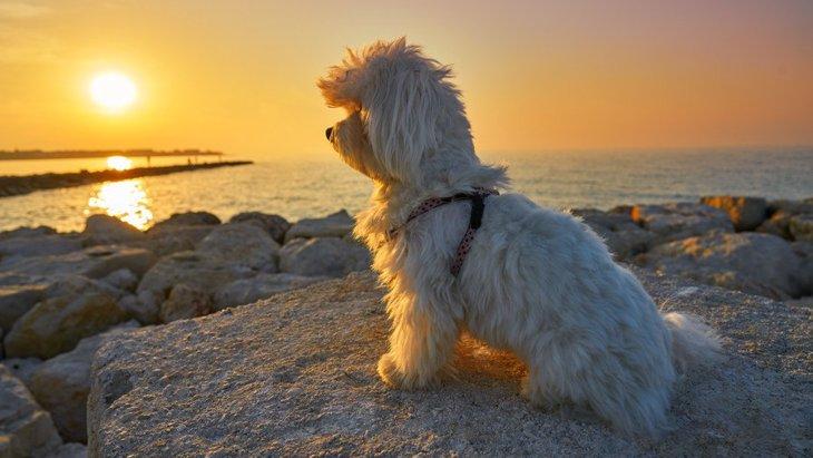 哀愁がすごい…愛犬がたそがれているときの心理5つ