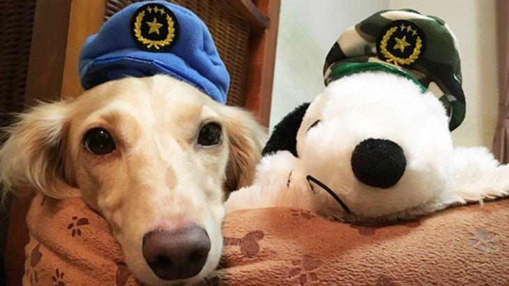 ガチャガチャを回して「かわいいかわいい犬のおまわりさん」になっちゃおう!