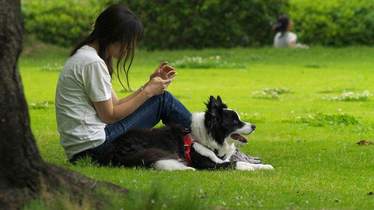 犬との散歩でトラブルを起こさないためのマナー5つ