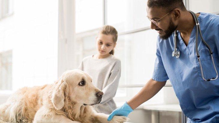 犬を病気にさせてしまう飼い主のNG生活習慣4つ