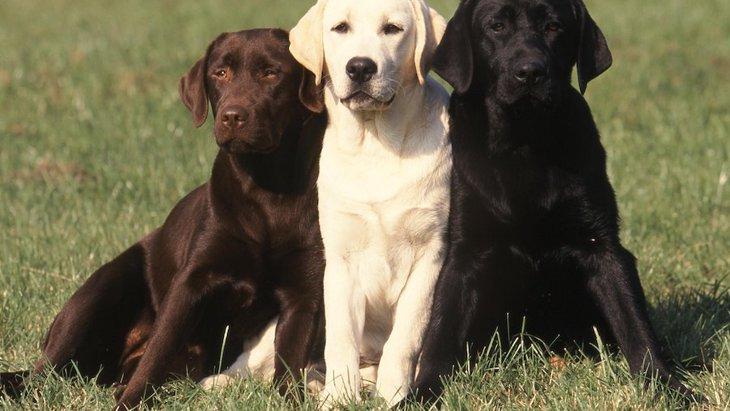 躾のヒントも!犬の社会的本能について