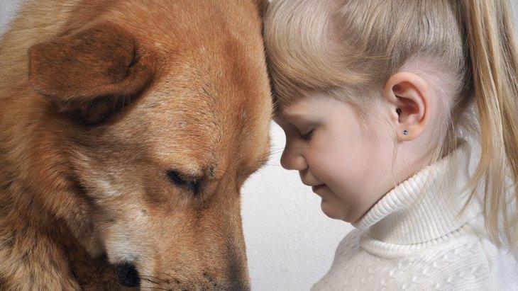 犬が寄ってくるのはなぜ?その心理と人間との関係、愛情表現のサインとは