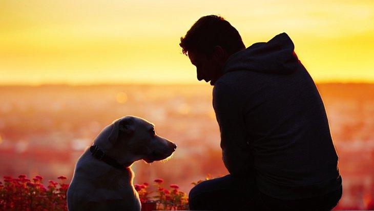 人と犬とのセカンドチャンス! 刑務所で行われている画期的なプロジェクト
