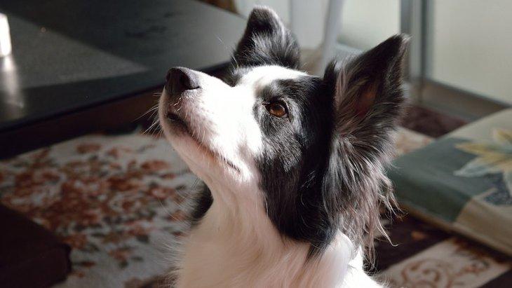 犬を吠えない性格にする方法と注意点