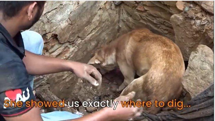 子犬たちが生き埋め!必死で助けようとする母犬の姿に涙...