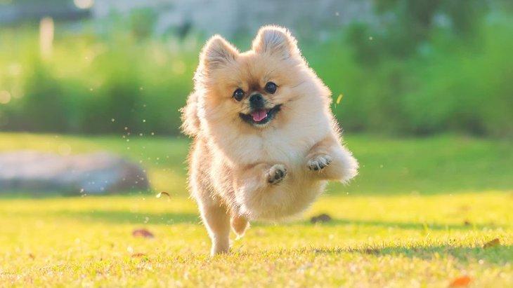 犬が狂ったように走り出すときの心理3つ