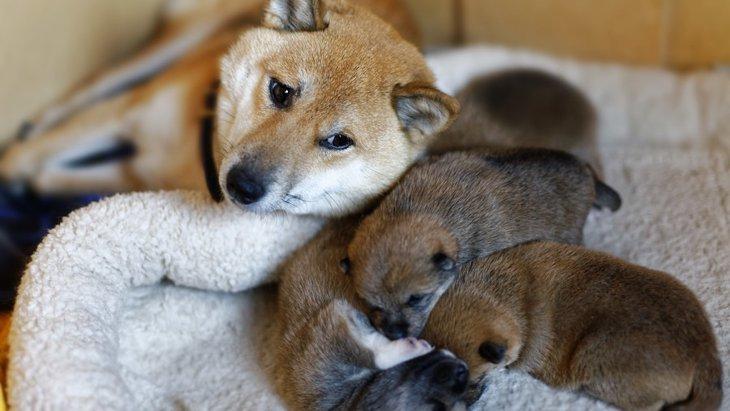 子犬と成犬でこんなに違う?!成長によって変化する犬の見た目
