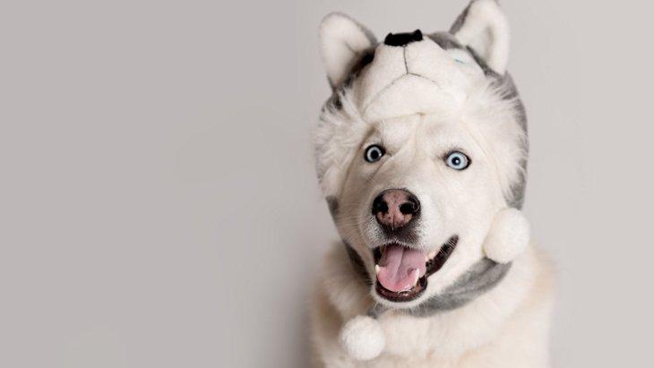 犬に『帽子』は効果アリ?考えられるメリット・デメリット