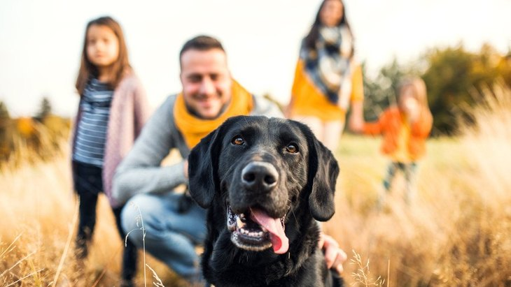 犬が「ちょっと苦手…」と感じている家族にする行動5選