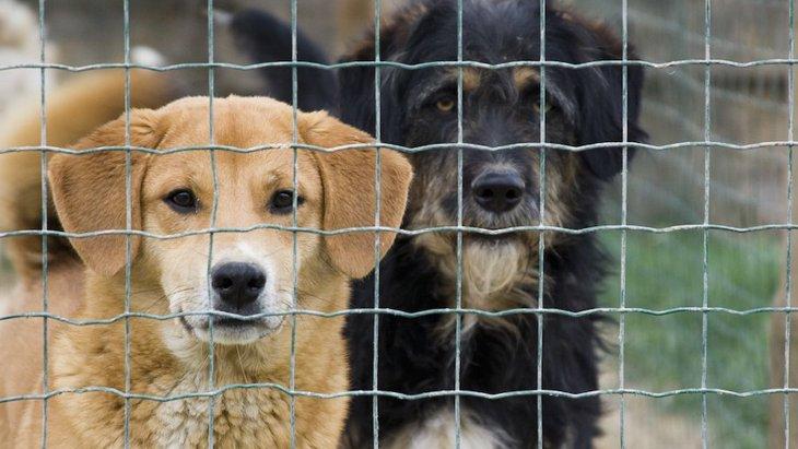 保護犬を育てるには「過去」を考えた接し方が大切です