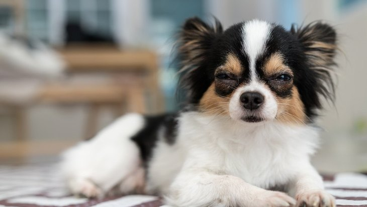 犬が『眠たい時』によくする仕草や行動5選
