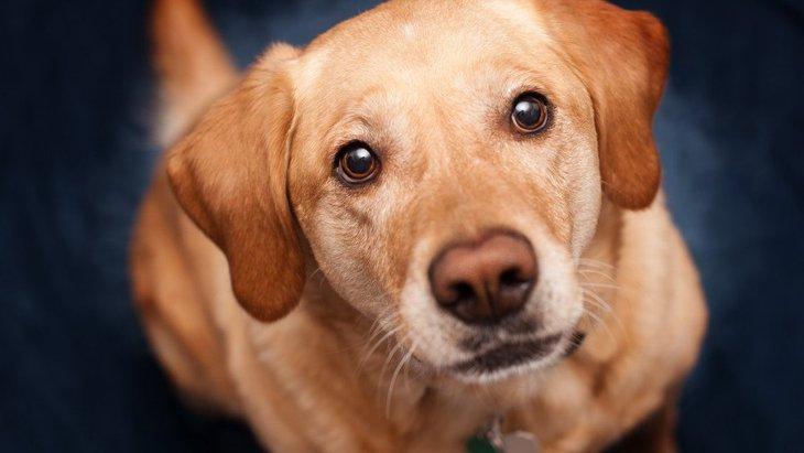 犬が『本気噛み』をする心理3選!やめさせる方法は?